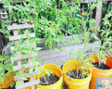 Urban Tech Garden Instagram